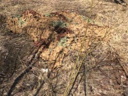amouflage net reed2